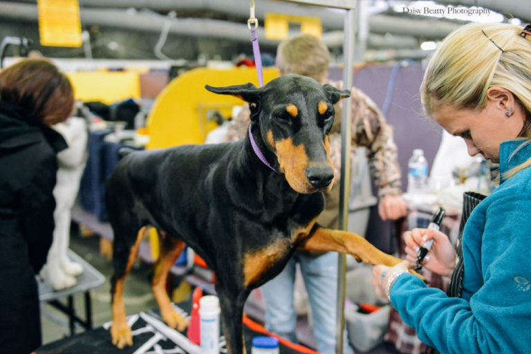 Westminster Dog Show 2015 Newborn And Family Photographer In Nyc