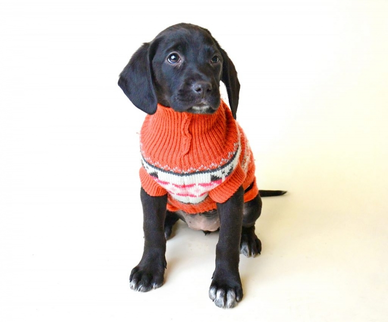 a rescue puppy at social tees nyc by daisy beatty photography