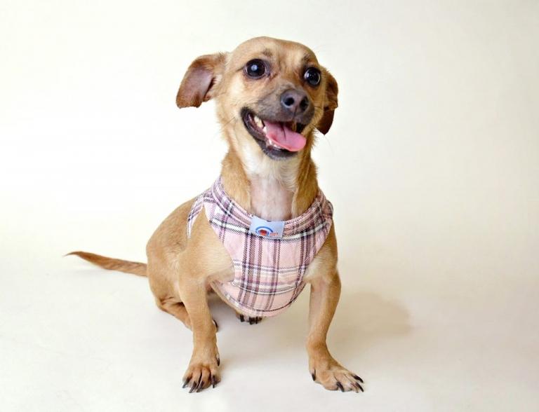 ny rescue dog volunteer opportunity by daisy beatty photography