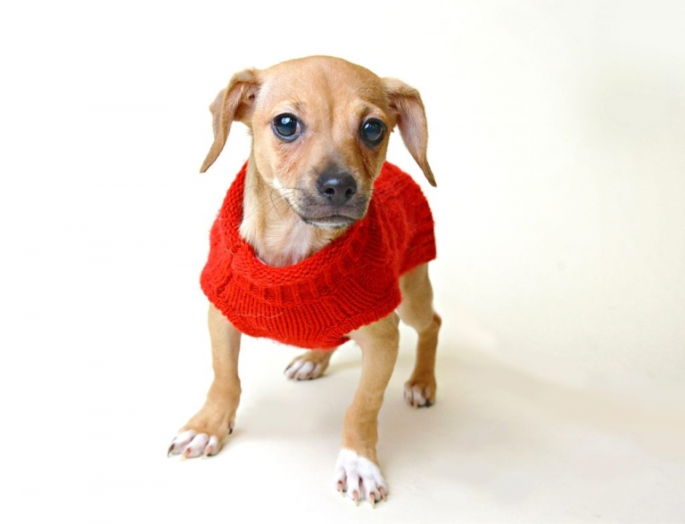 a rescue puppy in manhattan at social tees animal shelter