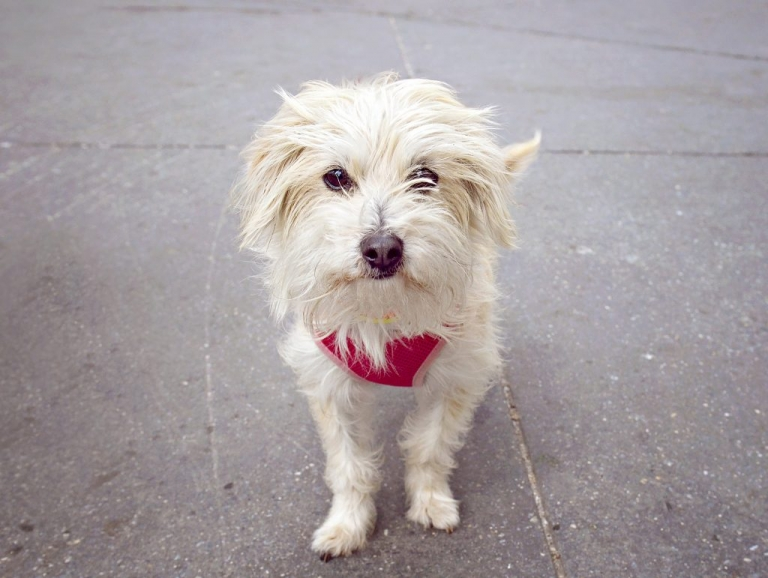 new york city community service with shelter dogs at social tees nyc