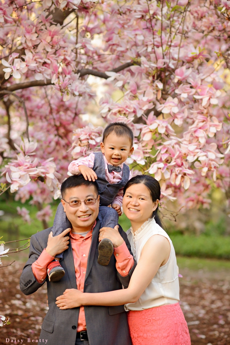 family photo session in central park with magnolia blossoms by best manhattan photographer daisy beatty